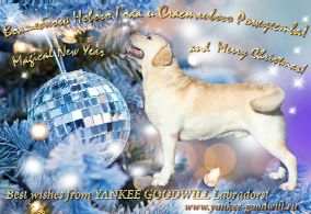 Besr wishes from YANKEE GOODWILL labradors!